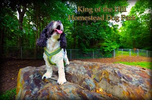 Woof Woof! Dog Parks in Chapel Hill, Carrboro & Durham