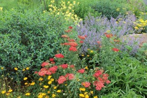 Creating Native Plant Gardens